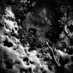 The space in between (Dom Guillochon) Tags: life nature rocks earth space pacificocean shore seashore tidepools inbetween seaweeds