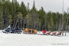 Motoslitta nella taiga, snow-mobile on the taiga (paolo.gislimberti) Tags: trees snow tourism alberi forest finland neve turismo conifers firs finlandia foresta conifere abeti