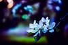 DSC04073.jpg (gi.s822) Tags: gardens newjersey sony rutgers a7ii rutgersgardens