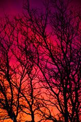 Human Soul #44 (TrojanHorsePictures) Tags: winter nature colors sunrise hike soul