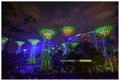 Supertree Grove @ Gardens By The Bay (wsboon) Tags: city travel cruise light sky holiday color tourism water architecture clouds composition buildings relax corporate design photo google search nikon singapore asia exposure cityscape view nocturnal skyscrapers heart perspective visit tourist calm explore photograph land destination serene cbd pimp nocturne dri singapura centralbusinessdistrict blending singaporeriver singaporecityscape masteratwork marinabay skywalkers uniquelysingapore singaporecity peopleculture flowerdome marinabaysands d700 singaporecruise singaporelandscape silvergarden singaporetouristattractions gardenbythebay supertreegrove nocommentsimplyperfectsingaporeview singaporefamouslandmarks