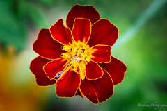 Plante de jardin 6 en 3D (Bouhsina Photography) Tags: red flower color macro green beautiful yellow jaune wonderful rouge amazing bokeh vert jolie couleur 70d ef100mm28 bouhsina bouhsinaphotography