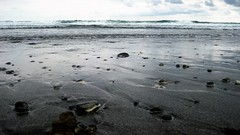 Mindoro Beach, Vigan (1) (Pilgrim Progressing) Tags: ocean shells dark blacksand sand ominous foreboding shore vigan southchinasea mindorobeach
