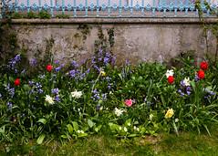 20160424-5D3_9453 (Terry Payman) Tags: garden jeannette