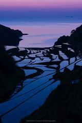 Terraced paddy fields at twilight (Tomohiro Urakawa) Tags: twilight    terracedpaddyfields