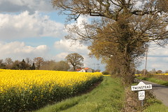 Twinstead, Essex (Henry Hemming) Tags: road flower field sign yellow countryside village vibrant seed rape oil essex twinstead