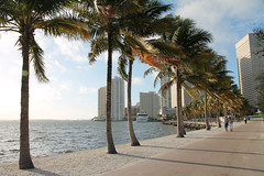 Miami, Florida (MJR96) Tags: ocean blue trees usa sun green beach nature water weather skyline clouds buildings palms outside outdoors downtown florida coconut miami palm atlantic sidewalk shore mia fla coconuts