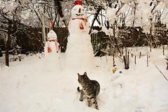 Invadors (Costin Stanciu) Tags: winter snow cat nikon snowmen