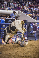 01132016 PBR Finals Dallee Mason-Beef Cake Rae-3 (nikkiarae) Tags: beefcake pbrfinals rodeophotography nikkiaraephotography nationalwestern2016 dalleemason nwss2016