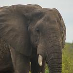 An Elephant thumbnail
