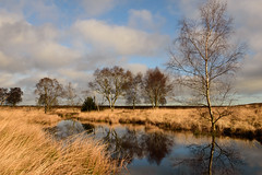 Cannock Chase (SkylarkUK) Tags: trees reflection water pool clouds landscape staffordshire waterscape cannockchase
