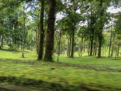 IMG_9697.jpg (Pete Finlay) Tags: bali indonesia id bedugul baturiti balibotanicgarden