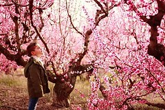 Angel's pink landscape. (Desamfotos) Tags: pink flowers trees valencia