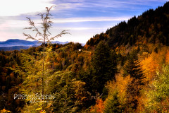 Autumn's Approach (Deb Scannell) Tags: landscape blueridgeparkway macroshots fall2012 fineartcollectionwork