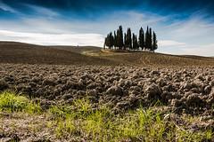 Cipressi (Sara Mulatto) Tags: landscape tuscany cypress siena toscana terra valdorcia cypresses cipressi cipresso torrenieri