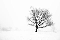 Day 295/365 ... Fog (Bo Hvidt) Tags: bw monochrome fog blackwhite nik 365 xt1 silverefex bohvidt nikcollection fujifilmxt1 xf1024mm fujinonxf1024mmf4rois
