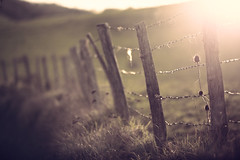 Alambrada de la Ultzama (Gure Elia) Tags: sunset green backlight fence contraluz atardecer wire dof pdc navarra alambrada nafarroa ultzama hff