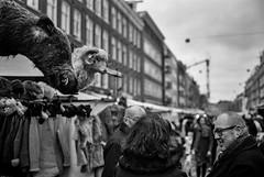 Animal talk @ Albert Cuyp (Amsterdam) (PaulHoo) Tags: city people urban film amsterdam animal analog mediumformat market kodak tmax albert citylife talk 120film 6x9 nik 690 fujica cuyp 2016 gw690 trimax silverefex