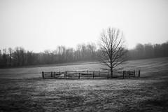 The Mercer Oak - Princeton Battlefield (William E photo) Tags: park tree oak nikon state nj mercer princeton battlefield 58mm 14g d3s