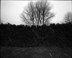 Untitled-384-JPEG (Kiriakos Korakis (korax67)) Tags: kodak trix 2016 mamiya7 43mm prespes