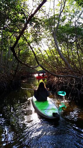 2_10_16 Kayak Paddleboard Tour Sarasota FL 04
