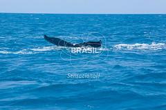 NE_Abrolhos0082 (Visit Brasil) Tags: horizontal brasil fauna natureza bahia nordeste detalhe externa abrolhos semgente diurna