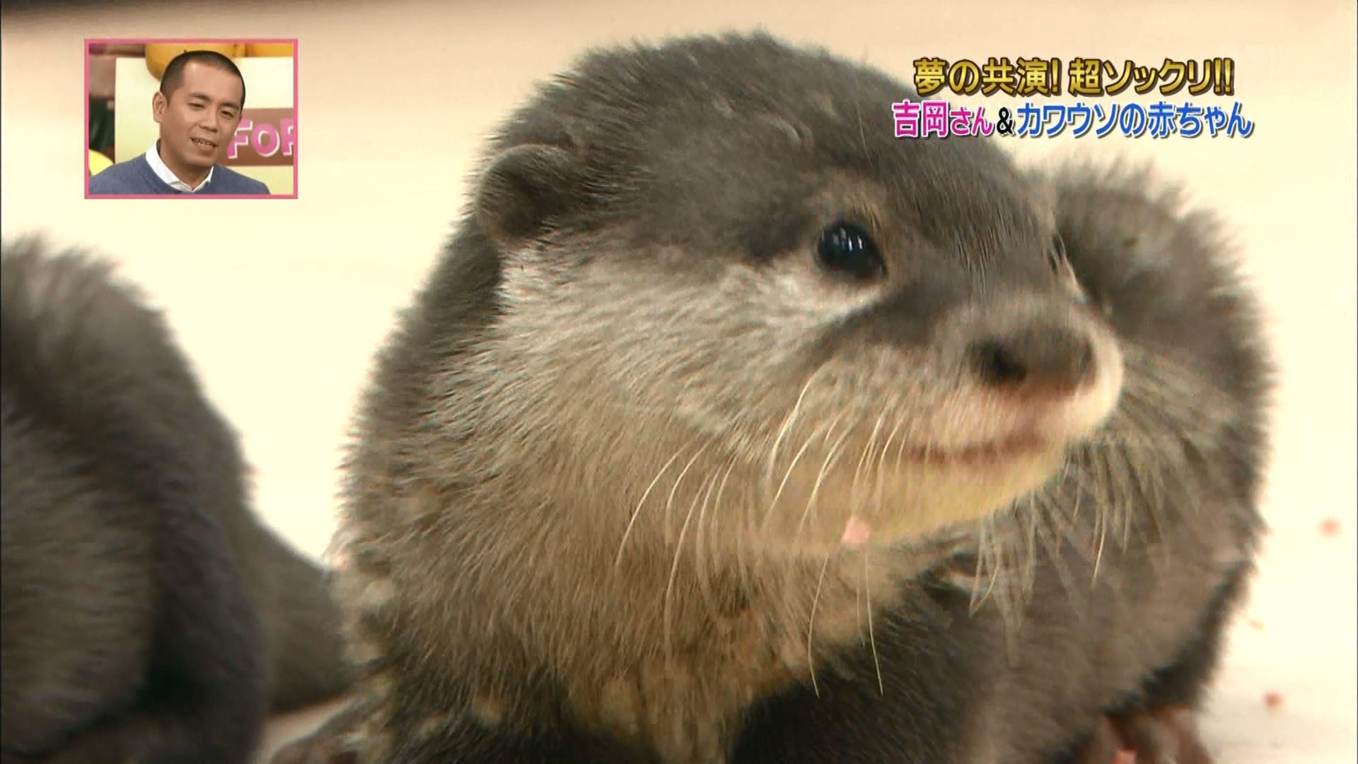 2016.02.27 全場(天才!志村どうぶつ園).ts_20160227_211351.318