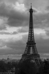 IMG_8913 (SylvainDupuyPhotos) Tags: paris tour pniche toureffeil effeil