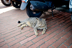 Rest cat (kivx) Tags: new cute comfortable zeiss cat 35mm lens f14 sony rest taipei fe a7 α7 猴硐 貓村 新北市 ilce7 sel35f14z