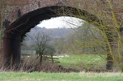 That bridge (Lexie's Mum) Tags: bridge field fence sheep railway foliage fields fencing railwaybridge trres