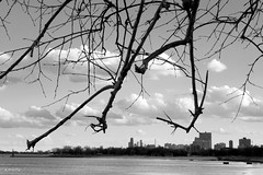 Chicago, March (Andy Marfia) Tags: blackandwhite bw chicago tree skyline spring branches lakemichigan f8 edgewater lakefront iso125 1400sec sonyrx100