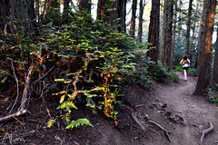 _AKU7085 (Large) (akunamatata) Tags: california sunset berkeley miller trail joaquin joachim