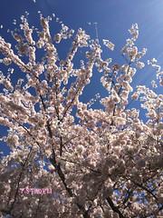 Trees, Bees, and Sun Beams (Tina Stadeli) Tags: