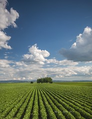 (Novica Alori) Tags: plants serbia soil agriculture plain atar fertile baka njiva usevi pannonian