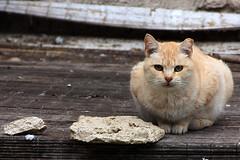 Gato callejero (Egg2704) Tags: naturaleza cats animal cat gatos gato felinos felino animales naturalia lindosgatitos egg2704