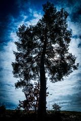 2016 Tree silhouette (jeho75) Tags: alps tree silhouette zeiss austria sterreich sony alpen ilce kitzbhel nadelbaum 7m2