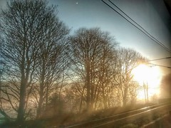 From a train 2 (tubblesnap) Tags: cameraphone morning trees motion blur mobile misty train photography moving phone cellphone motorola motog tubblesnap