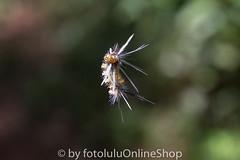 Argentinien_Insekten-79 (fotolulu2012) Tags: tierfoto