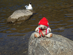 LD 6 Wed Rydal & Grasmere 3 Rydal Water 2 & DT & Gull (g crawford) Tags: ted danger toy teddy rydal grasmere gull lakes lakedistrict teddies crawford dt ld dangerted
