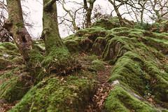 Moss (Roj) Tags: wood uk trees green nature wales woodland moss rocks hill cymru llanberis canon5dmkii canonef24mmf14liiusm photographersontumblr originalphotographers sourcerojsmithtumblrcom
