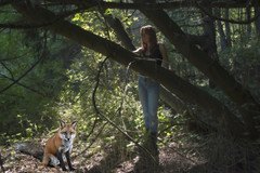 Fox Magic (marylee.agnew) Tags: trees light red portrait nature self woods outdoor wildlife magic fox