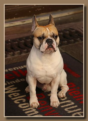 Willkommen ... Welcome ... Bienvenue (p_jp55 (Jean-Paul)) Tags: dog chien france animal frankreich hund nancy welcome bienvenue lorraine tier willkommen lothringen