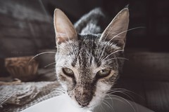 It this cute cat ? I don't think so  (abidabdulrahman) Tags: morning cute art love animals cat flickr natural sony saudi cameraman        vscocam rx100m3