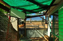 The green room (HOLLY HOP) Tags: windows house green texture abandoned home outdoor decay empty australia victoria walls abstracts disorder derelict confusion ruraldecay disarray greenroom disrepair hss decomposing centralvictoria bealiba hww sliderssunday bealibard