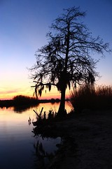 Silhouette Swamp Tree, S.E. Louisiana (HellCat Photography) Tags: sunset tree silhouette river landscape intense colorful sundown bright dusk scenic silhouettes vivid swamp lousiana riverbank bold madisonville tchfuncteriver