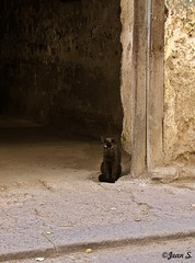 Occupation: tour guide (Jean S..) Tags: door black animal stone cat waiting sidewalk dust flin
