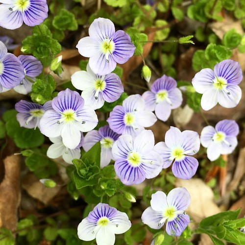 #ծաղիկներ #գարուն #Դիլիջան #spring #flowers #Dilijan