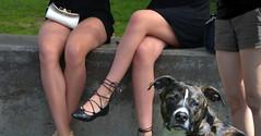 Dog Legs (swong95765) Tags: ladies dog cute beauty female pretty legs canine shorts envy skirts