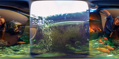 fishy fishy fishy fish (121/366) (severalsnakes) Tags: pet fish water aquarium underwater tank goldfish 360 missouri ricoh spherical waterproof degrees theta accessory sedalia thetas frieq theta360 saraspaedy
