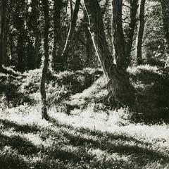 Colinton Dells, Edinburgh (Ivan B Palli) Tags: edinburgh lith foma moersch adoxgolf easylith colintondells